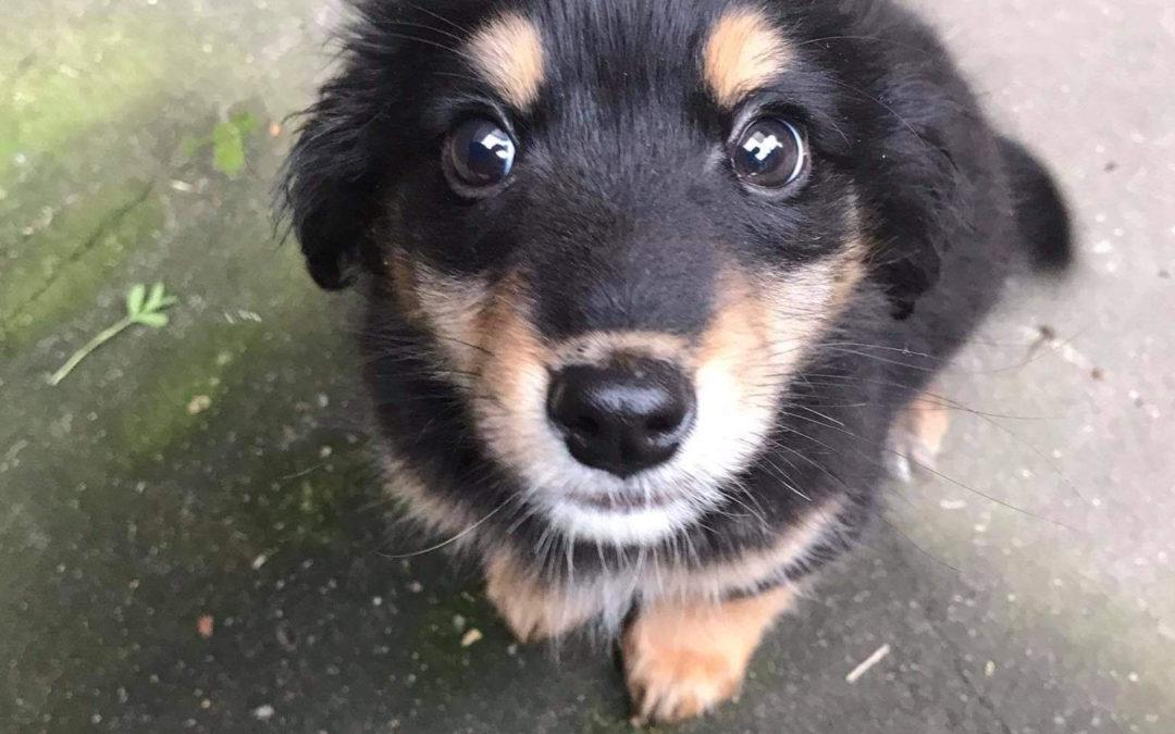 Pomoc w adopcji zwierzaka